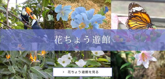 花ちょう遊館