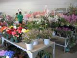 フラワーショップ「お花畑」