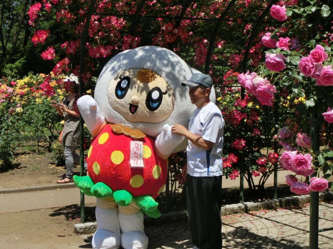 「コットベリー」と、咲き誇るバラ園で優雅なひとときをお過ごしください