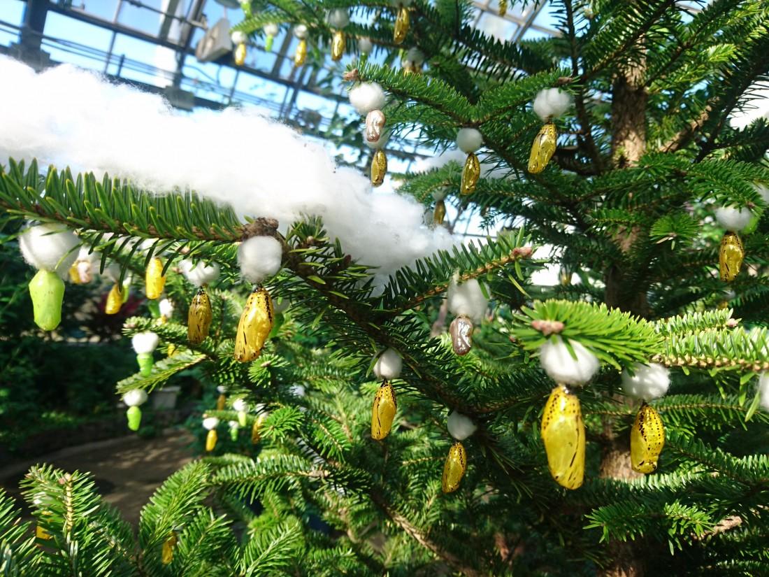 黄金のサナギツリー