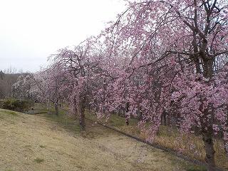 みかも山公園(平成28年4月1日)
