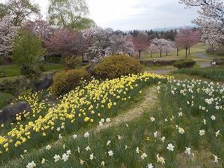みかも山公園(平成28年4月13日)