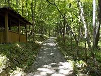 緑に包まれた散策路