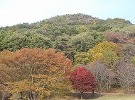 みかも山公園 11月の紅葉