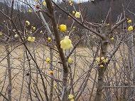 みかも山の花(平成28年1月5日)