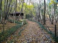 落ち葉の小道