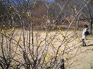 みかも山公園 1月の花