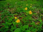 名前不明の黄色い花