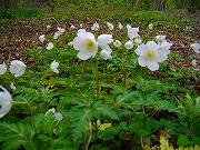 三毳山に見られる花(平成16年4月20日)