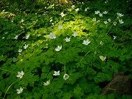 三毳山の花(平成26年4月25日)