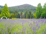 みかも山公園 6月の花