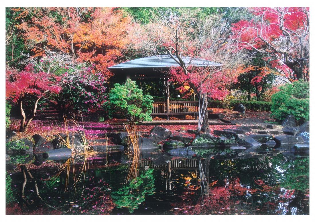 第30回栃木県営都市公園写真コンクール作品募集します!