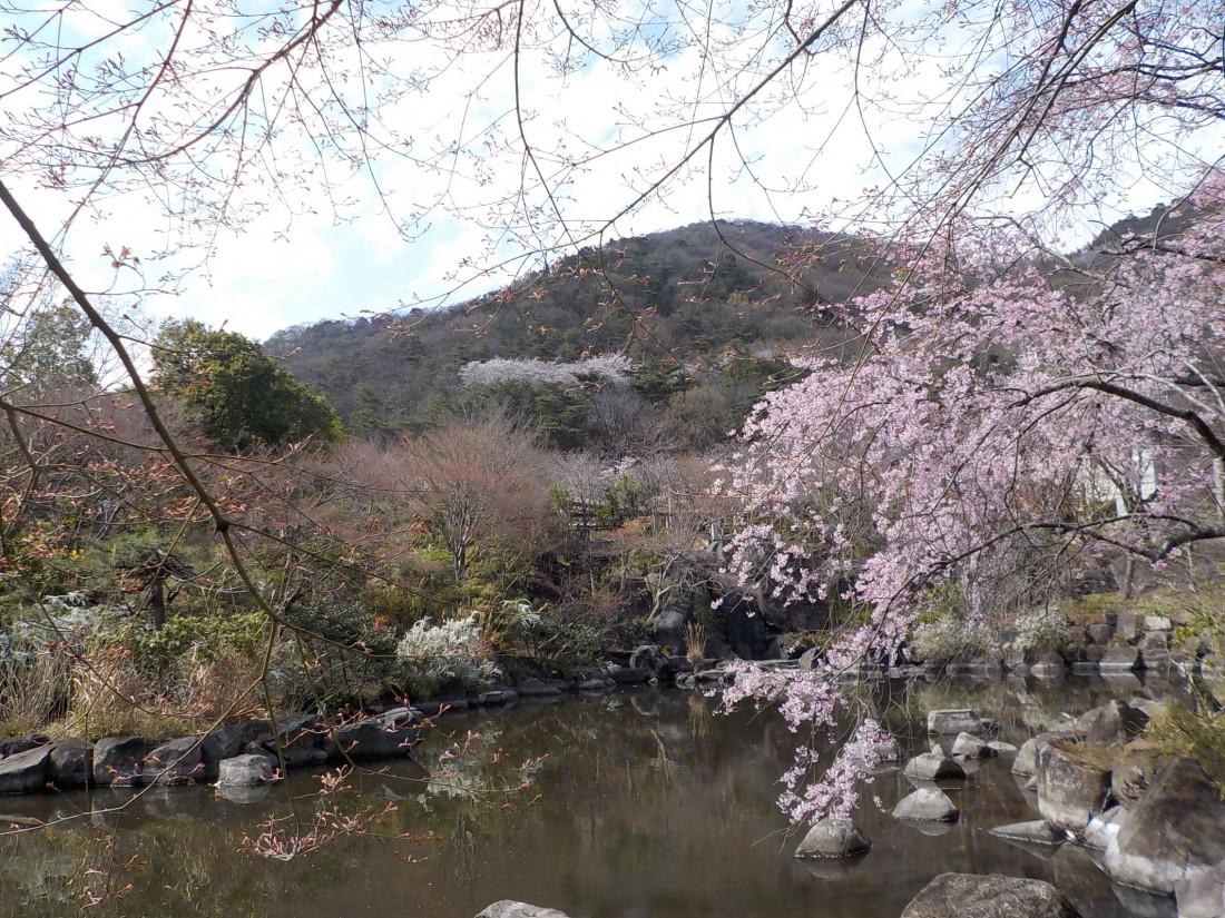 みかも山公園花情報(2017/04/07)