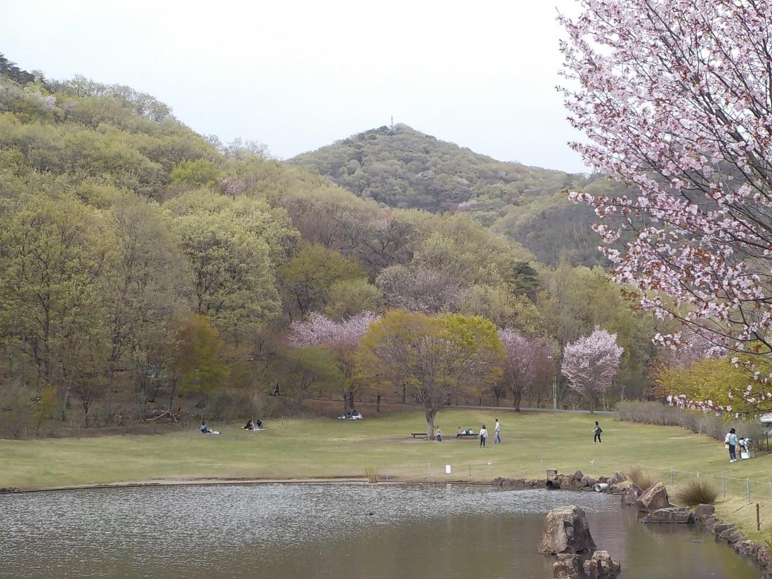 みかも山公園花情報(2017/04/15)