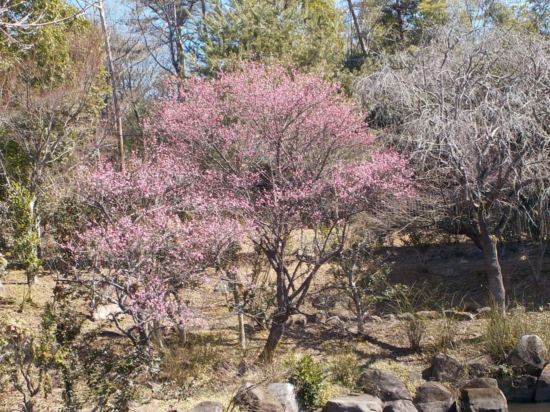 みかも山公園 3月の花