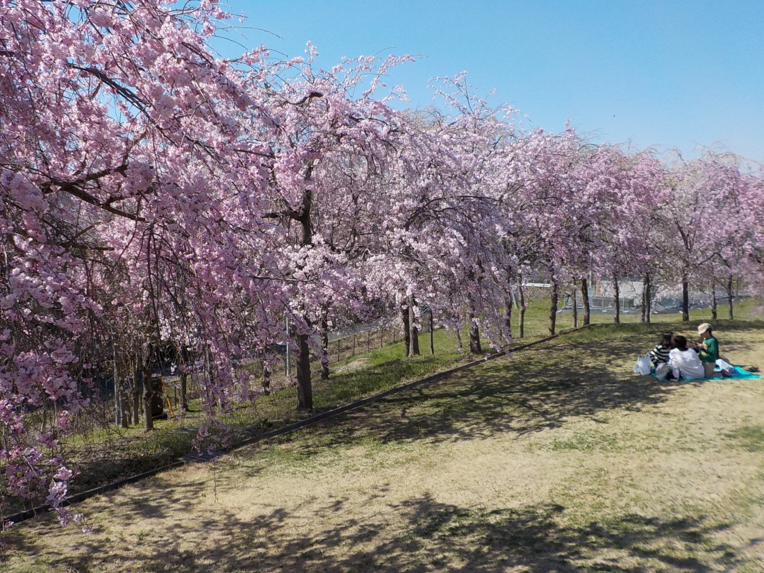 みかも山公園 4月の花
