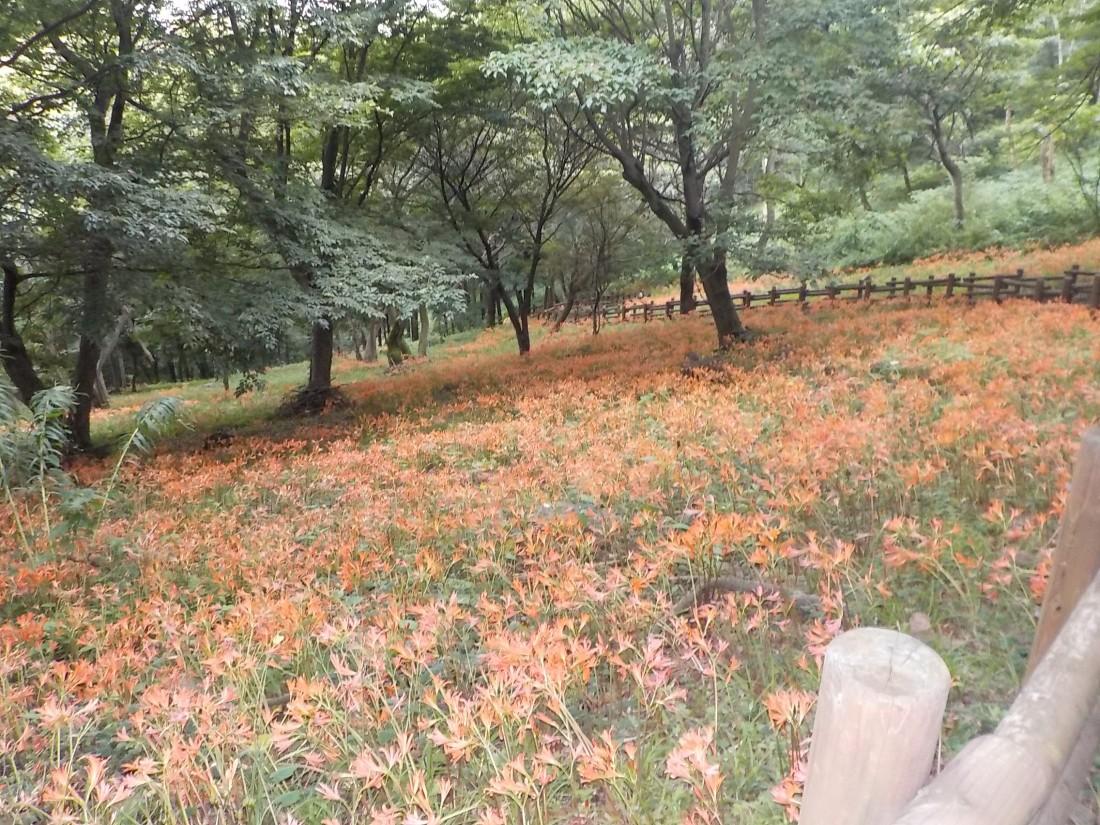 みかも山公園 8月の花