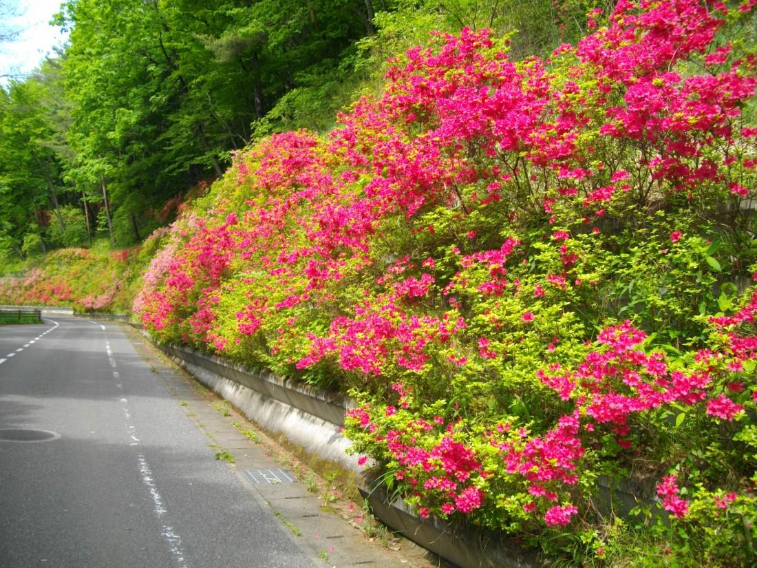 みかも山公園 5月の花