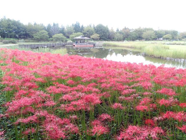みかも山公園 9月の花