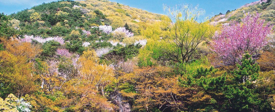 春のみかも山