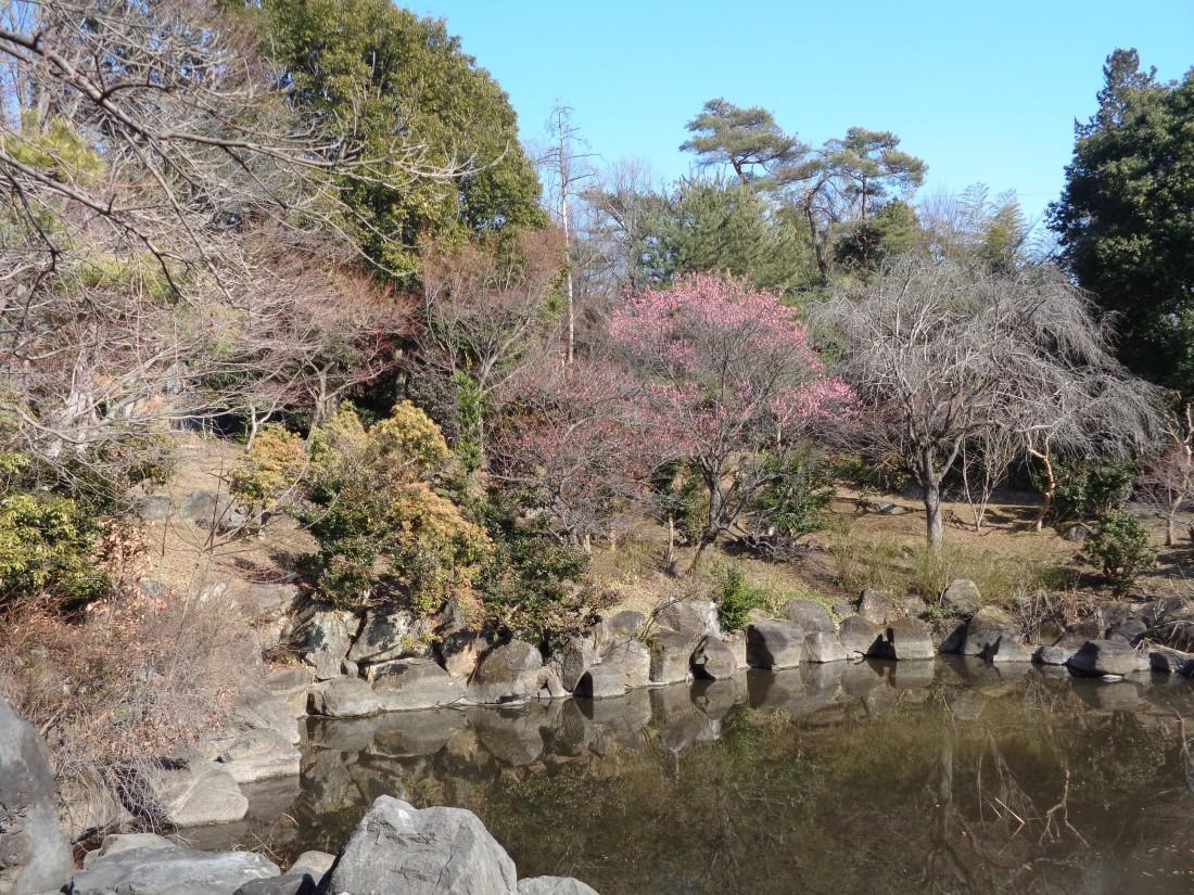 みかも山公園花情報(2019.03.21)