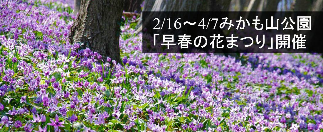 早春の花まつり