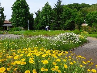 約40種類のハーブ園