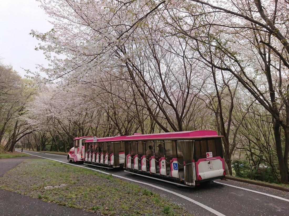 みかも山公園花情報(2021.3.30)