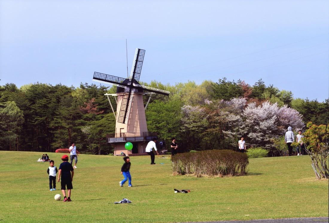 【春】踊る春の風車とサクラ