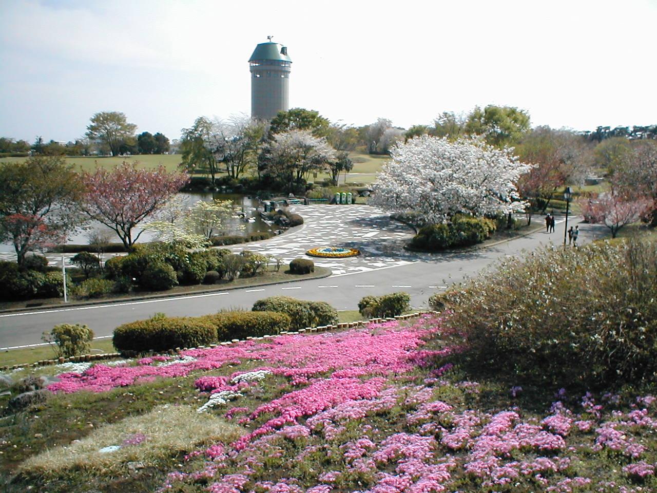 【春】花の丘とサンサンタワー