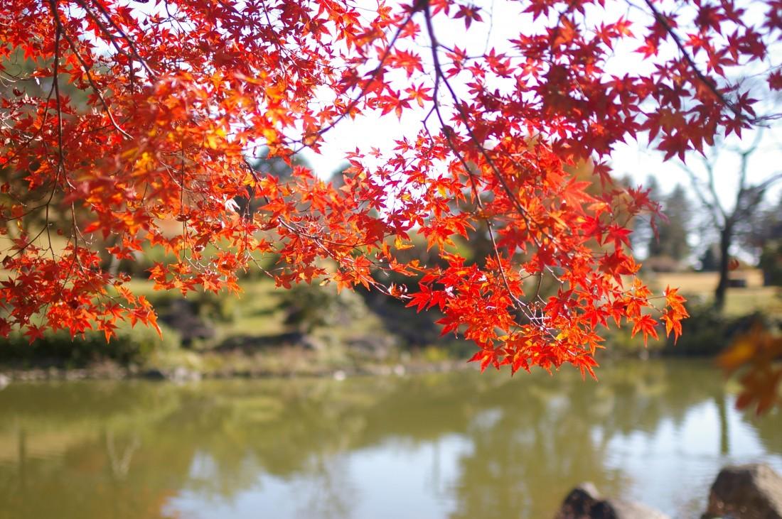 11月 紅葉