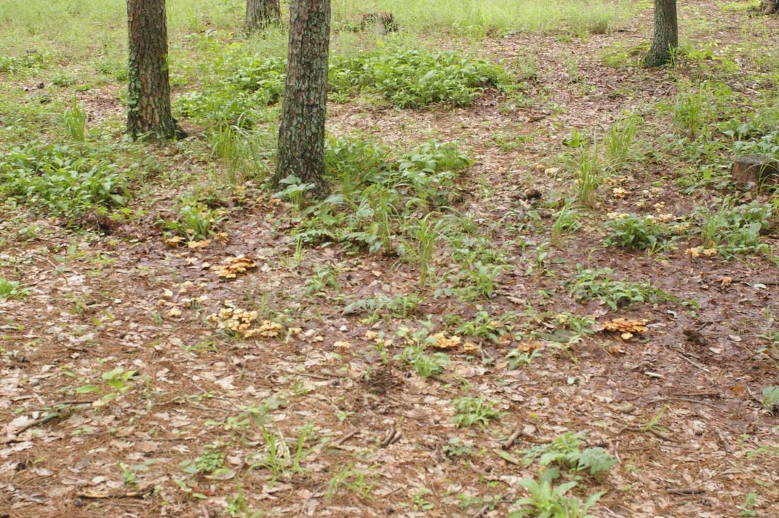 6~10月 キノコ類