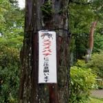 20170923_ichii (2)