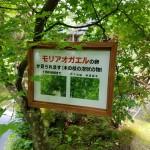 20170528_moriaogaeru_kanban