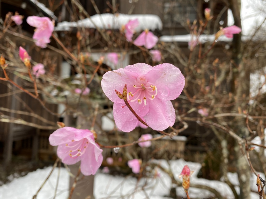 花情報 3月