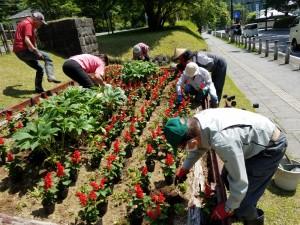 20200609_094830花植え