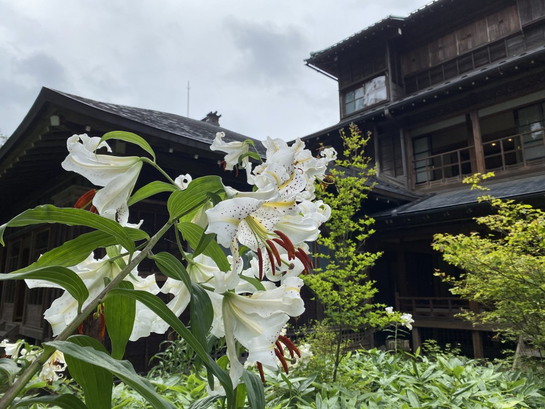 花情報 7月