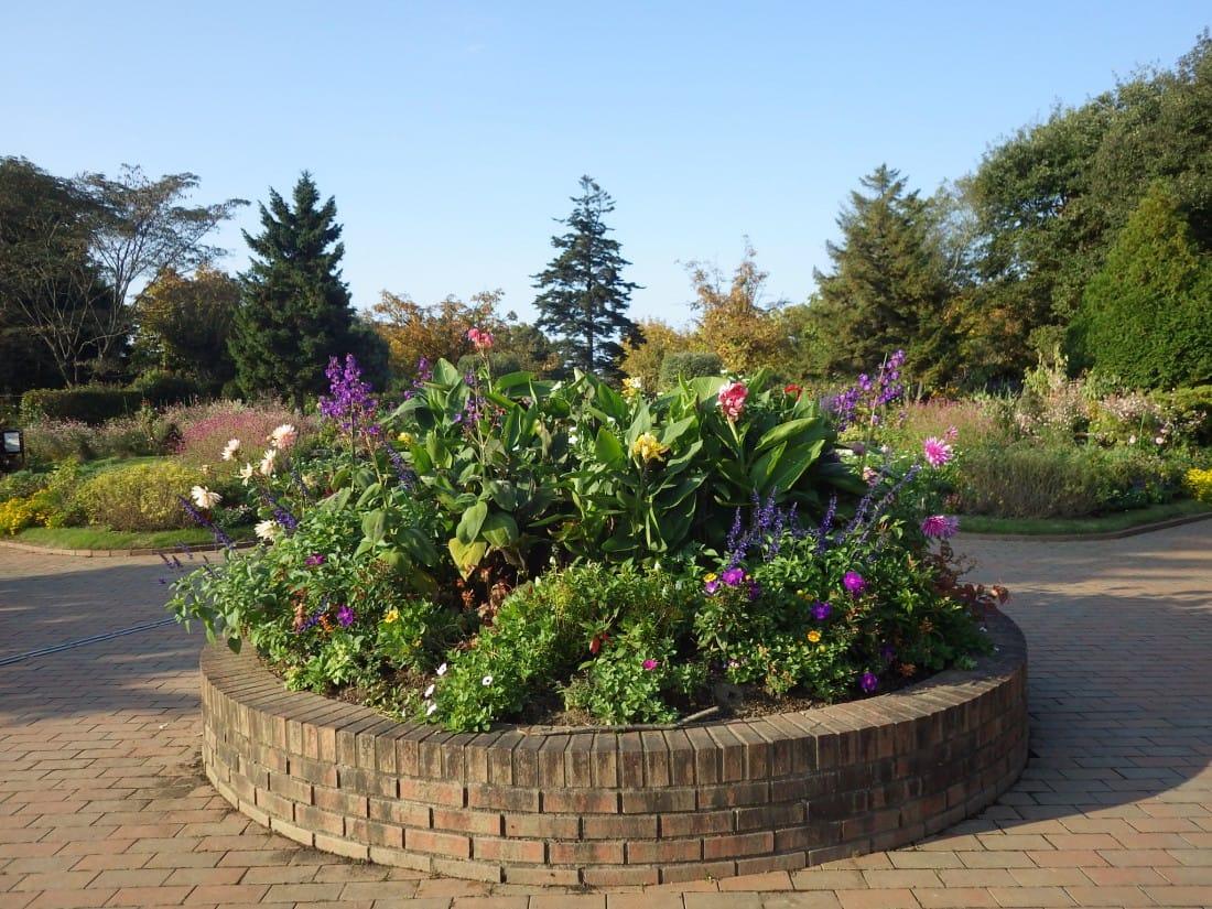 秋の夢花壇
