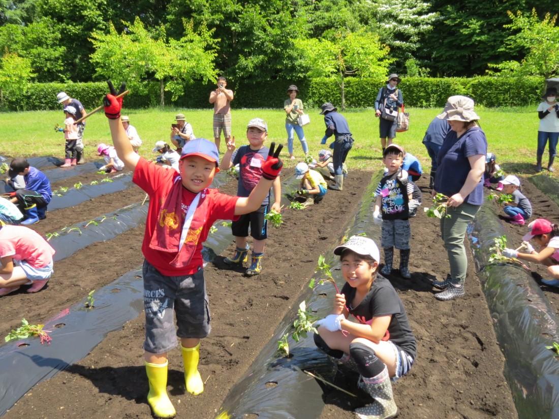 農業体験『サツマイモの苗植え』