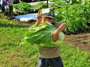 秋野菜の収穫