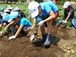 19.06.01じゃがいも収穫(農業体験プログラム) (74)