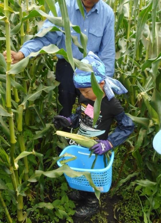 農業体験『スイートコーンの収穫』*満員